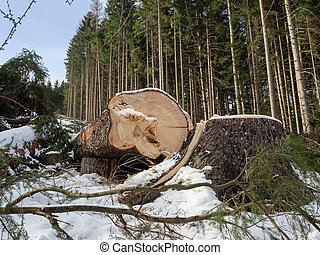 Felled tree with snow in winter