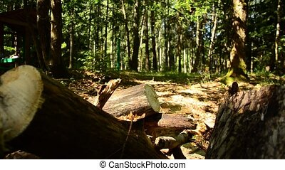 Felled trees in the forest. 89 - Felled trees in the forest