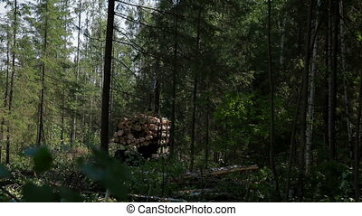Feller Buncher drives through clearing in forest - Feller...