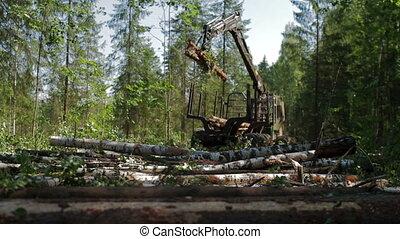 Feller Buncher drives through clearing in forest - Feller...