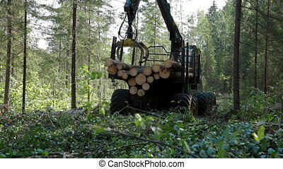 Feller Buncher loaded with trees - Feller Buncher loaded...