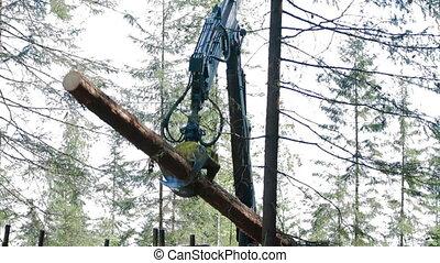 Feller Buncher loads tree trunks - Feller Buncher loaded...