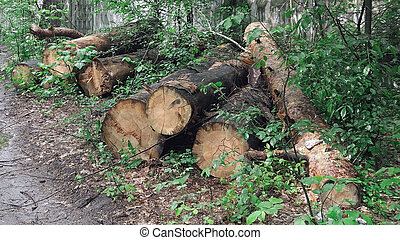 felling of trees in the forest
