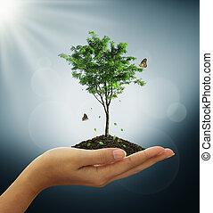 felnövés, zöld fa, berendezés, alatt, egy, kéz