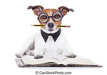 felolvasás, előjegyez, kutya