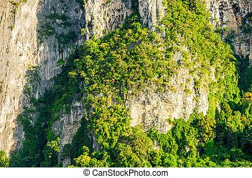 felsig, Bäume,  asia, grün, Wachsen, Klippen