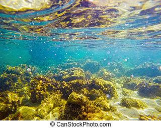felsig, meeresboden, in, alghero
