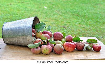 feltörés, közül, alma