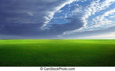felt, græsbevoksede