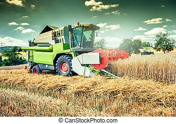 felt, hægte, hvede, arbejder, høstmaskine
