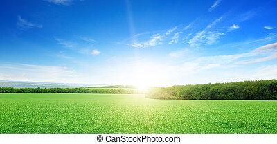 felt, hen, grønne, solopgang
