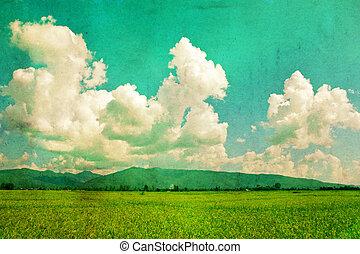 felt, himmel, baggrund, vinhøst