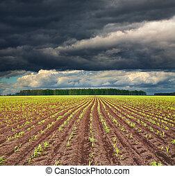 felt, hos, sprouting, mængder