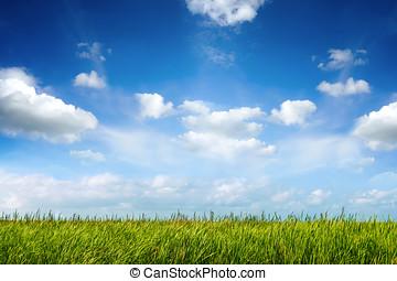 felt, i, grønne, frisk, græs, under, bl.