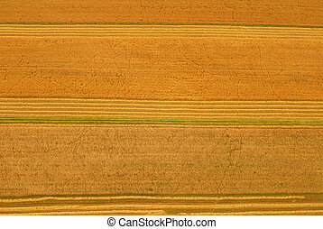 felter, aerial udsigt