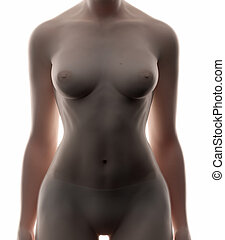 Female abdomen - real view female anatomy concept