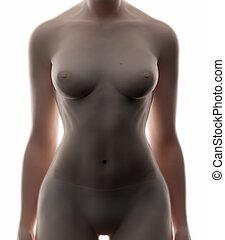 Female abdomen - real view female anatomy concept