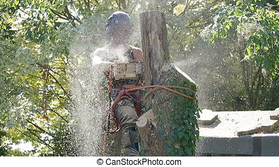 Female Arborist cutting down a tree - Female tree surgeon...