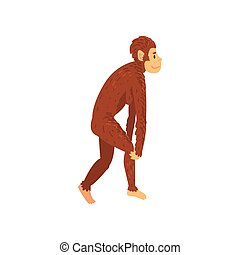 Female Australopithecus, Biology Human Evolution Stage, Evolutionary Process of Woman Vector Illustration on White Background.