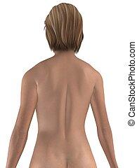 female back - 3d rendered illustration of a female body
