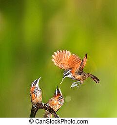 Female bird feeding a hungry baby on a deer antler