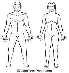 Female Body Shape Male Body Mass Illustration