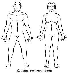 Female Body Shape Male Body Mass Illustration