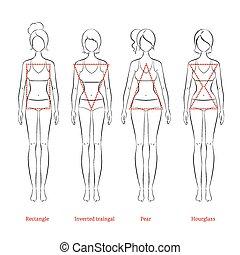 Female body types. Vector illustrat