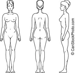 Female body. Anatomy illustration, isolated human, beauty...