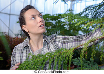 female botanist checking growing plants in greenhouse