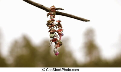 Female bracelet hanging on a tree - Female bracelet sways in...