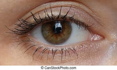 Female brown eyes close-up. Macro mode. 4k