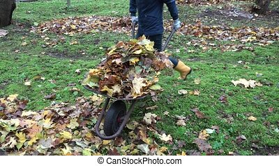 female carries dry leaves with wheelbarrow into compost...