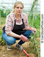 Female checking tomato seedlings