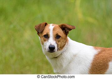 Female dog in a green field