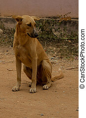 female dog sitting in the road