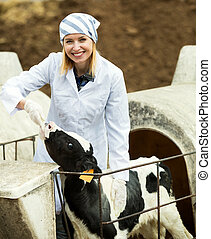 Female employee posing with young cattle - Attractive female...