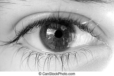 Female eye - Beautiful female eye