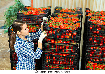 Female farmer arranging crates with harvested tomatoes
