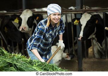 Female farmer collecting grass for cows - Female cattle-farm...