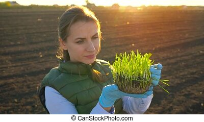 Female farmer examines a sample of seedlings before planting it in the soil