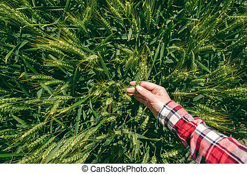 Female farmer in wheat field, personal point of view