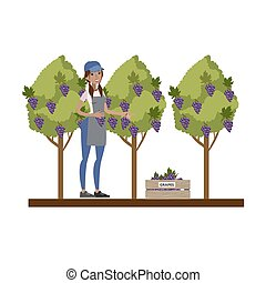 Female farmer picking grape from the tree