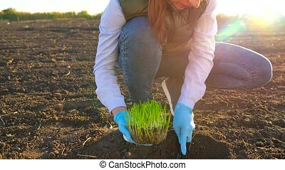 Female farmer puts a seedling prototype in the ground