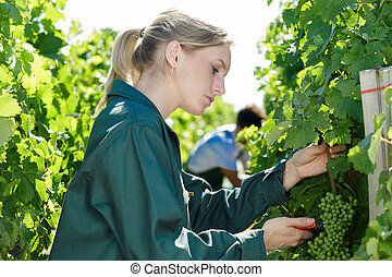 female farmer woman in the vineyard