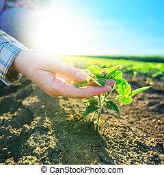 Female farmer's hands in soybean field, responsible farming...