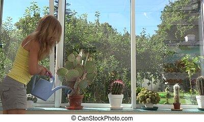 Female florist care various cactus plants growing in greenhouse. 4K