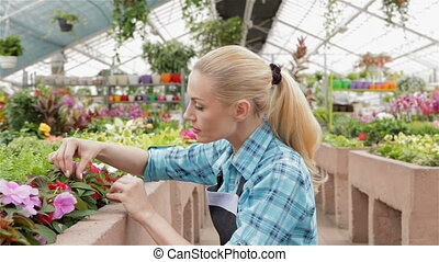 Female florist examines leaves and flowers of the plants at the garden centre