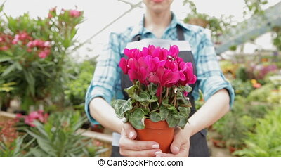 Female florist holds the flowerpot with pink flowers at the garden centre