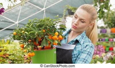 Female florist looking at mandarin fruits at the garden centre